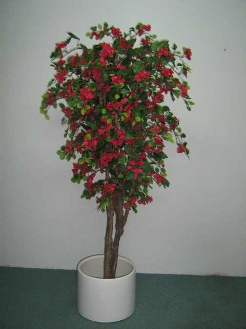 bouganvilla_plants_15m_.JPG