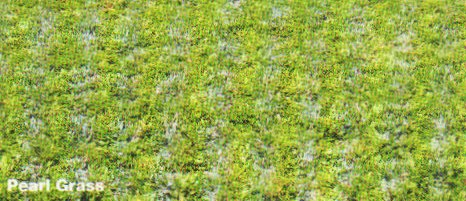 Pearl Grass