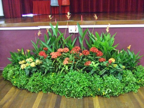 Plants Display for Event Stage - Plants Grouping