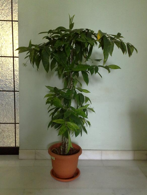 Image gallery japanese potted plants for Indoor japanese garden plants