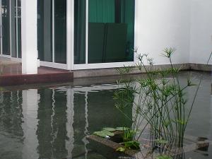Koi Pond 1