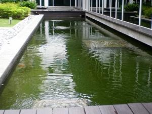 Koi Pond 7