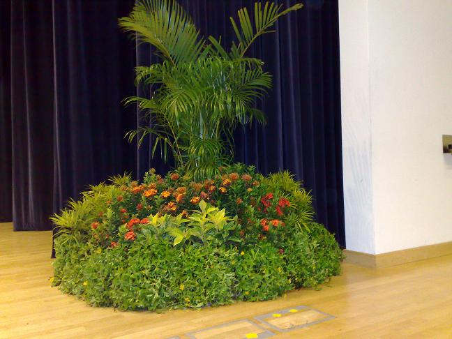 Event Display - On Stage Grouping with Yellow Palm