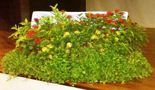 Event Plant Display - (Table Front) Catholic High Sec Sch