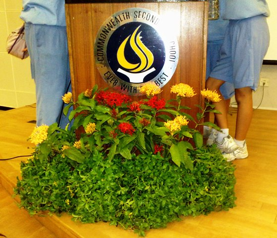 School Stage Plant Display - Rostrum Display