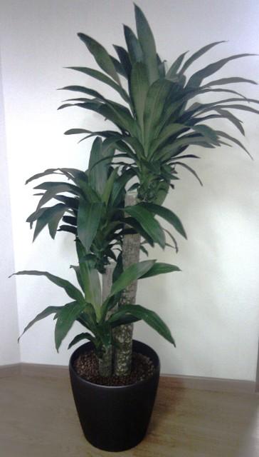Skyland Gardening 187 Office Indoor Plants