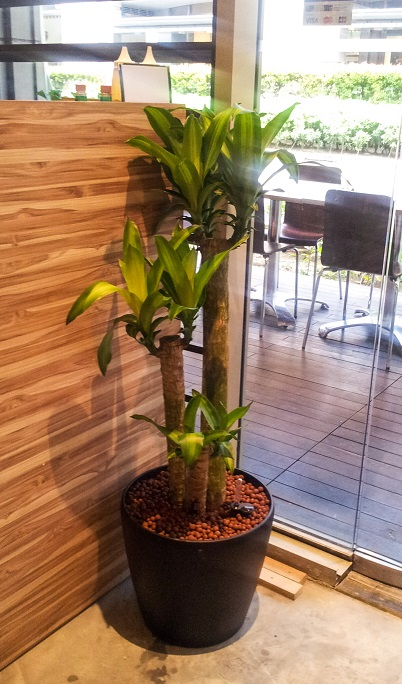 Skyland gardening office indoor plants for Indoor gardening singapore