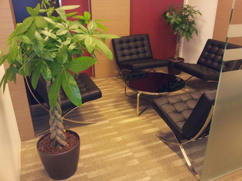 Skyland gardening office indoor plants - Indoor desk plants ...