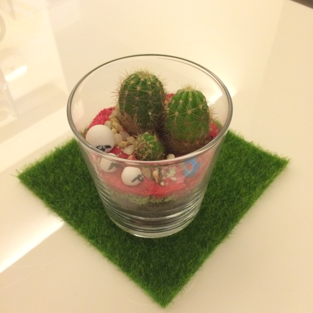 Terrarium-Plants-Mini-Glass-Cactus